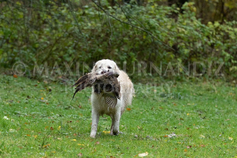 Dogs-4734.jpg