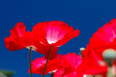 Wildflowers At Munir Kureshi's 5.22.05
