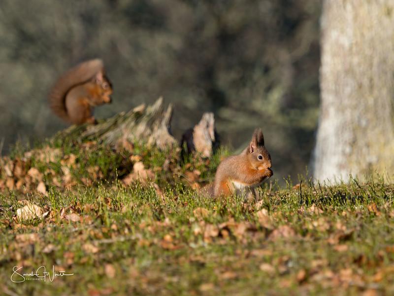 RedSquirrelBootCamp_130217_229.jpg