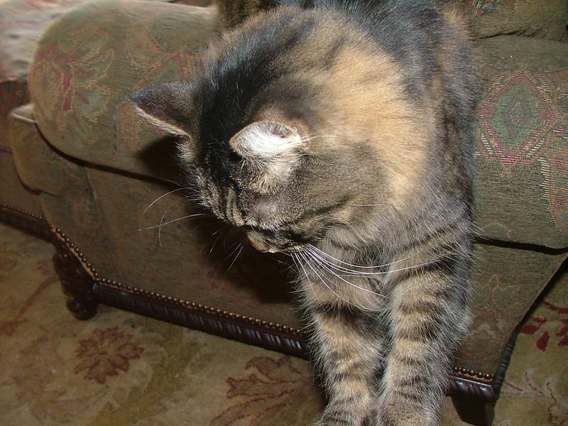 1848 kitty pt. 2