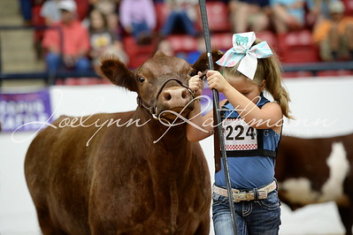 2017 Battle of the Cattle :: Fort Worth