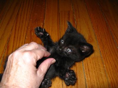 Kitten at four weeks