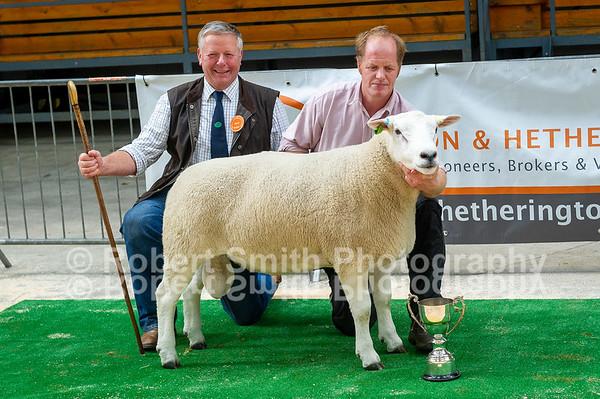Lleyn Sheep Society Show and Sale at Carlisle - September 27th 2018