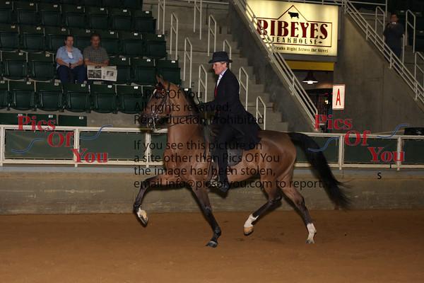 133 HA Country Pleasure Junior Horse Championship