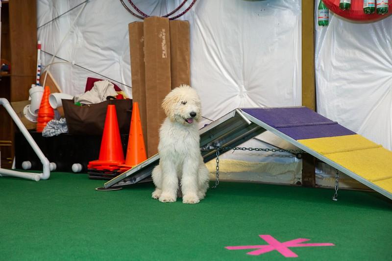 on Command dog Training June 2019-5205.jpg
