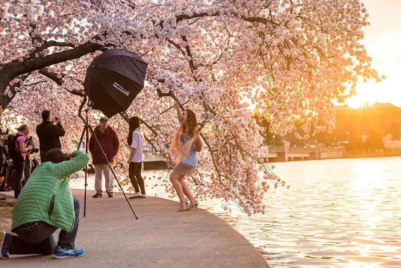 http://ihitthebutton.com/cherry-blossom-festival-sunrise/