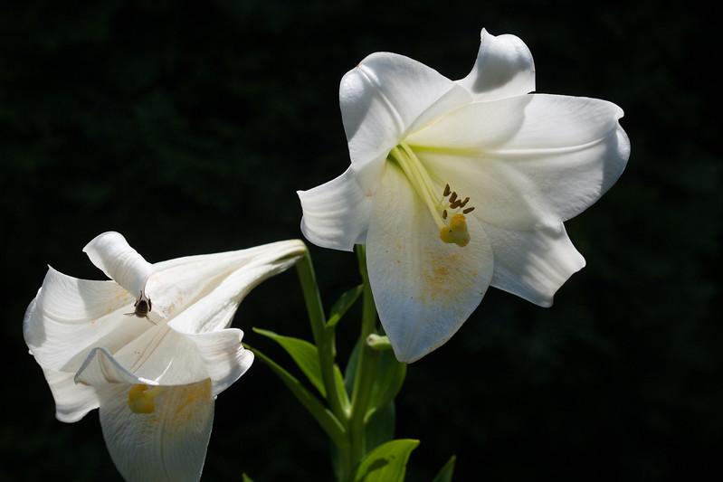 2009 06 30_NY Botanical Gardens_0748.jpg