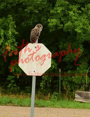 Owl 062115