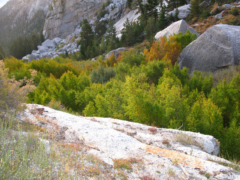 fall colors in the North Fork