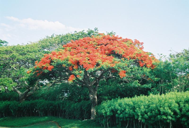 Hawaii-558.jpg