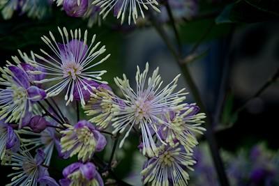 Flowers July 21, 2011