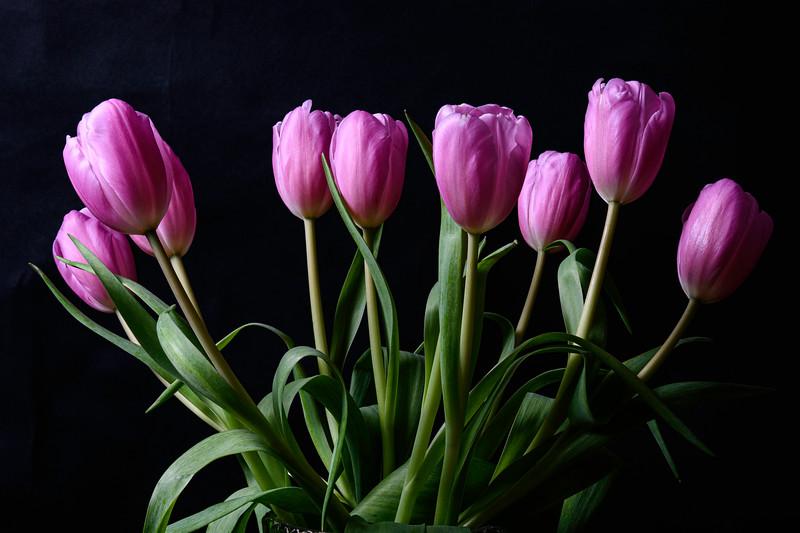 Tulips2020-001.jpg