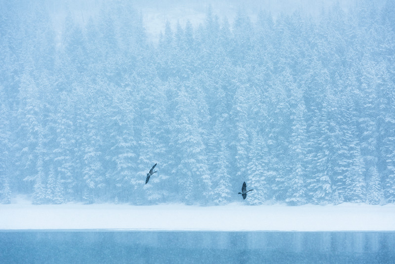 Geese_High.jpg