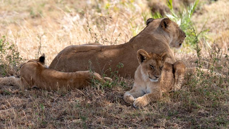 Tanzania-Serengeti-National-Park-Safari-Lion-07.jpg