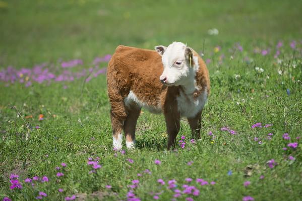 Ranch Spring 2016