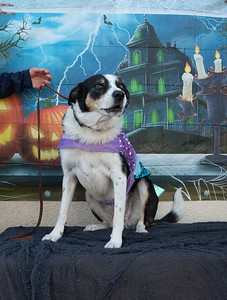Halloween Dogs USAR Party