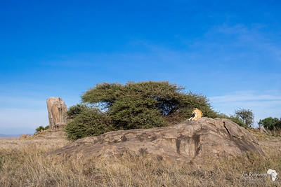 Gol Kopies in the Serengeti