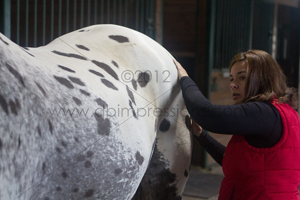 Behind the Bit Equine Massage