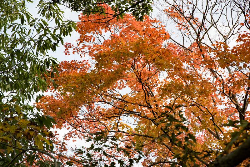 Chicago Botanic Garden 117.jpg