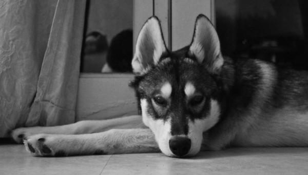 Kai The Wonder Dog