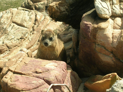Rabbits, Rodents, Bushbaby & Squirrels