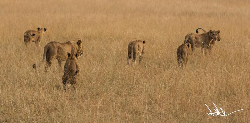 Lions Queen Elizabeth - Ssig-3.jpg