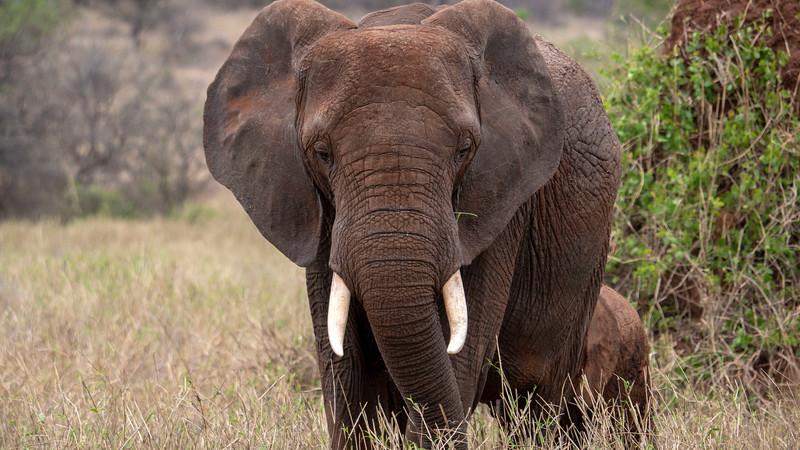 Tanzania-Tarangire-National-Park-Safari-Elephant-14.jpg