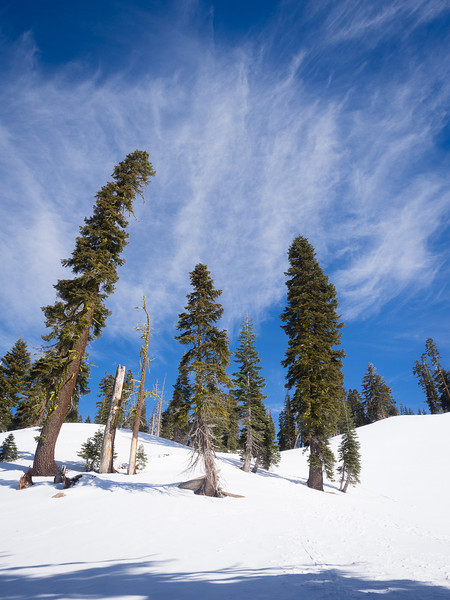 Lassen snowshoeing