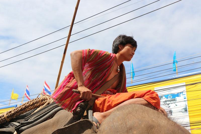 2014-11-14 Surin Elephant Welcome Feast 487.JPG