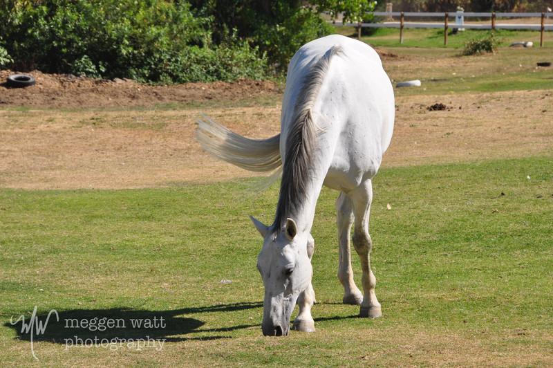 EB&Horses-061.jpg