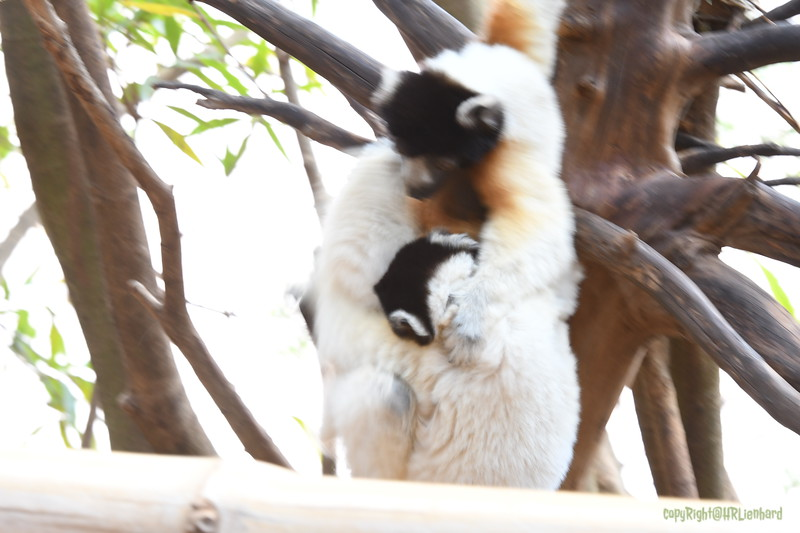 Madagascar 2017 (26)