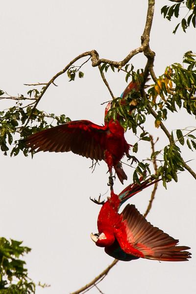 Rainforest34.jpg