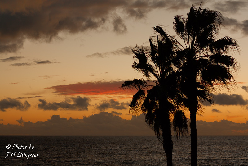 Sunset and Palm Trees.jpg
