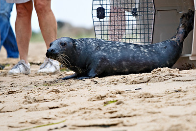 Seal Release August 2008