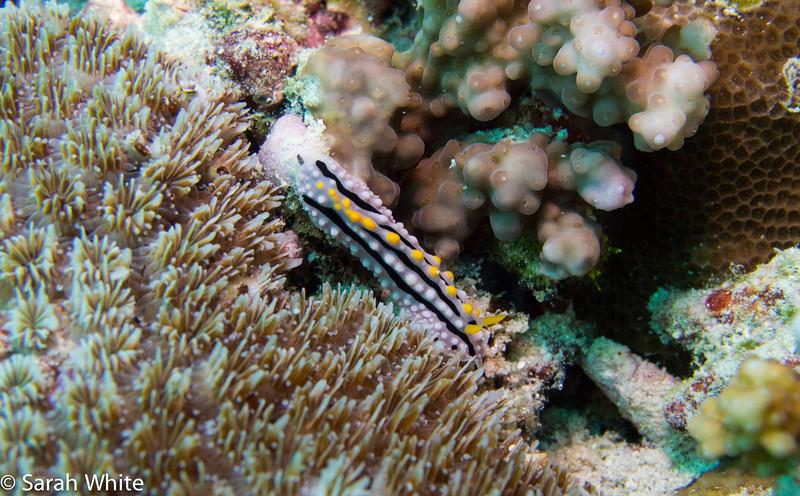 Maldives 2012-314.jpg