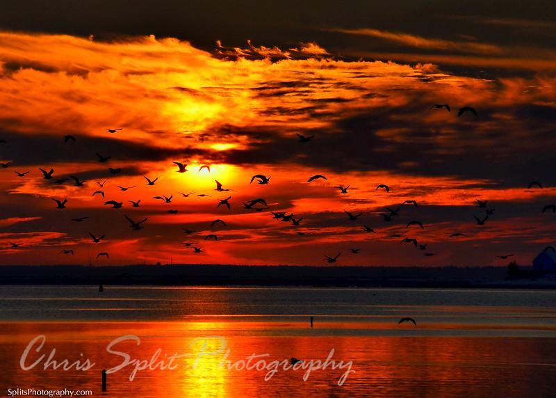 sunset gulls hd2.jpg