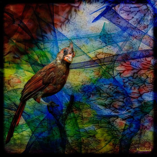 Melange of Colors