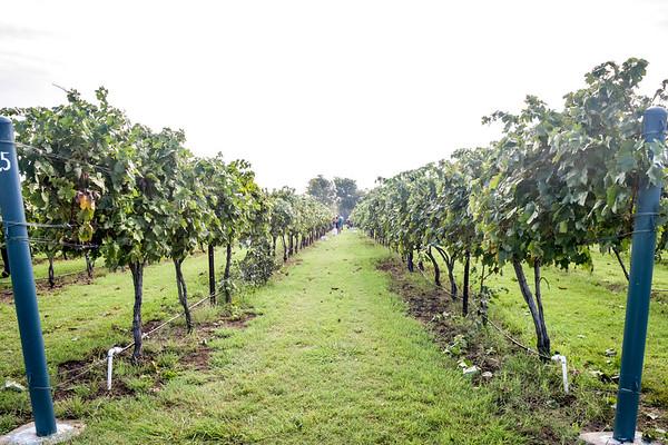 Eden Hill Tempranillo Harvest 2016
