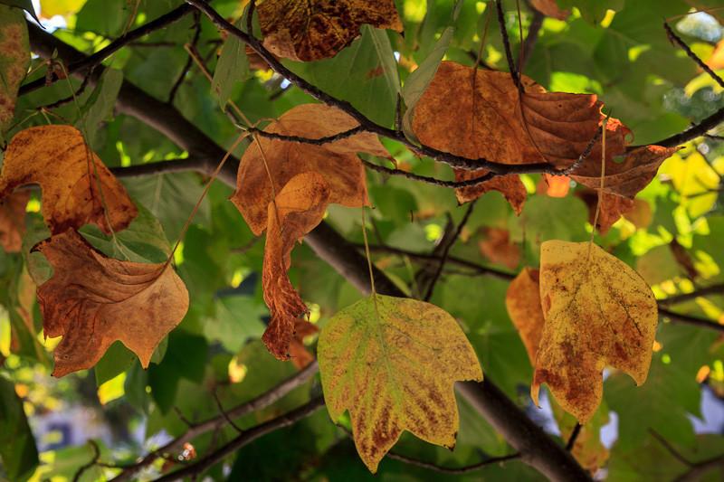 sep 26 - fall leaves.jpg