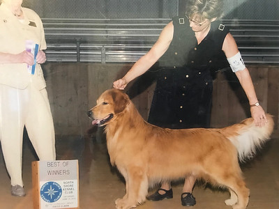 Past Champions and show dogs