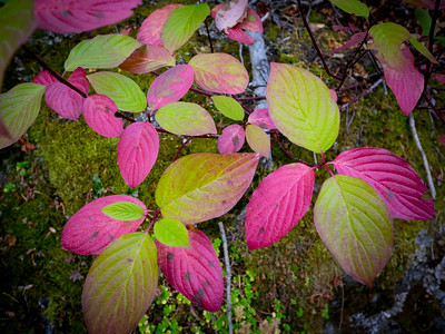 Enchantments Thru-Hike - Sept, 2016