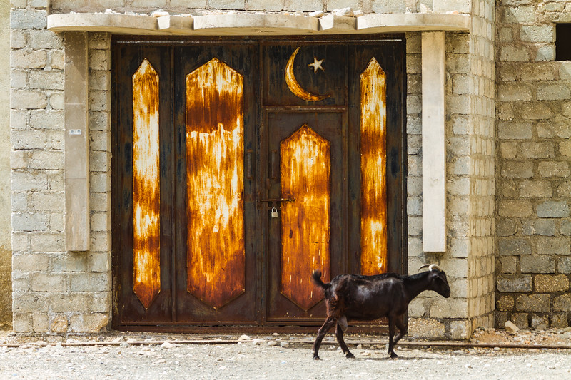 Goat walking in front of closed rusty gate - Oman