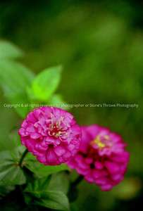 017 flower lucas spring04 0006