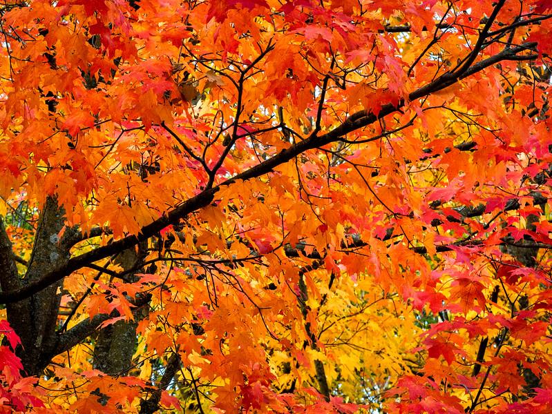 Fall Color_1.jpg