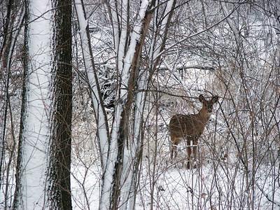 Minnesota Animals