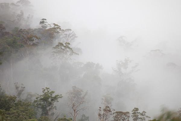Sydney Blue Mountains RAW/TIFFS