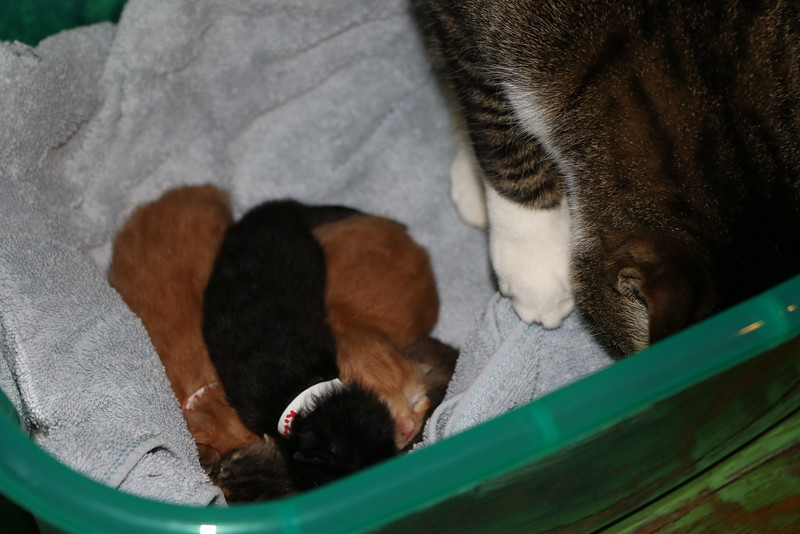 Trapping Mom and Kittens - 040115 - 9.JPG