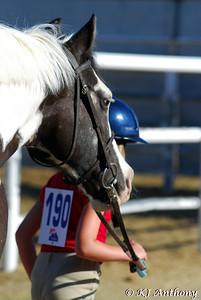 Talisman Farm - Sun Horse Show 2009