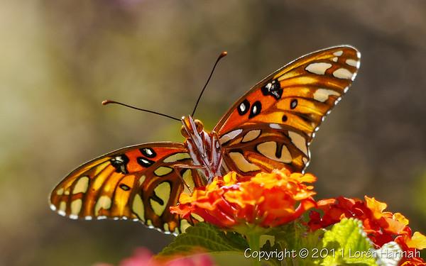 North Carolina Wildlife & Macros