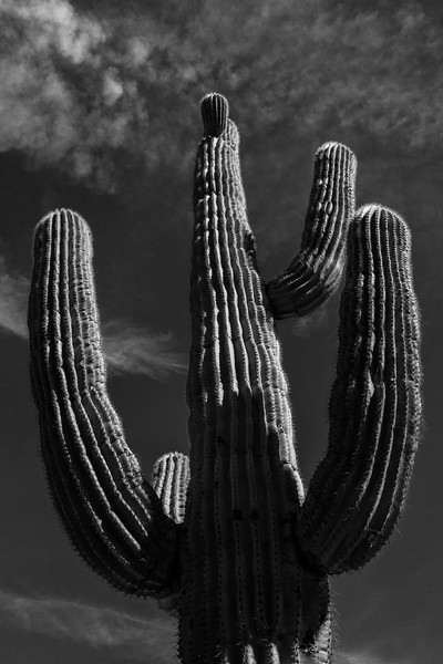 SONORAN DESERT, ARIZONA